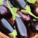 eggplant harvest haiti